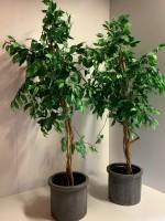 Kunst Plant In Pot
